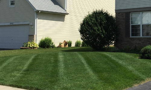 Front lawn in Plainfield for our mowing service.