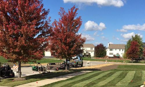 Lawn renovaion in Oswego, Illinois