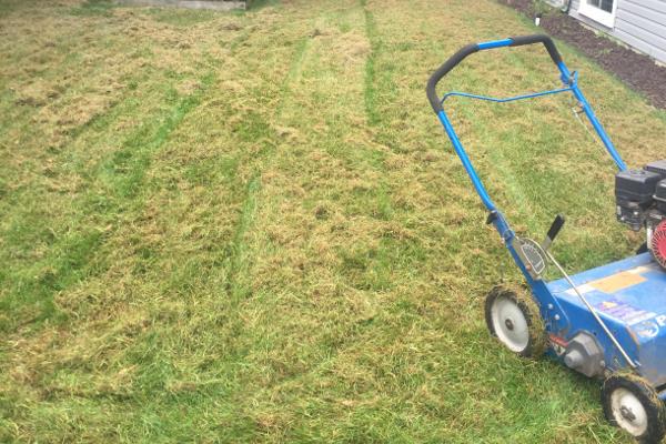 lawn dethatching