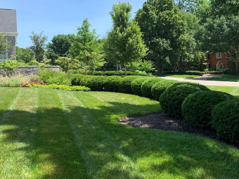Aurora lawn service
